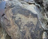Фрагмент петроглифов в Саймалуу-Таша