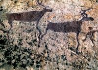 Беломорские петроглифы. Сцена охоты на оленей.
